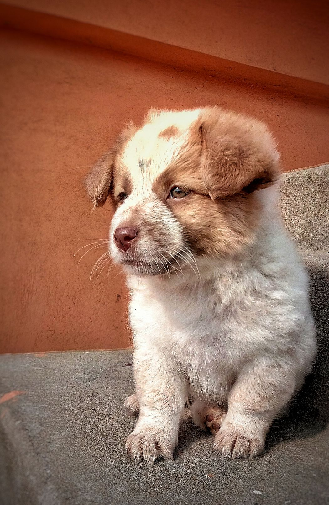 One Animal Mammal Pets Domestic Animals Dog Close-up First Eyeem Photo