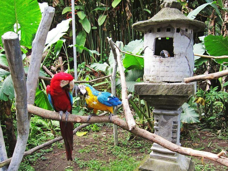 Hey...you 2 are talking about me ? Macaw Beautiful Creature Animals Balisafari Birds Traveling at Bali Bali, Indonesia