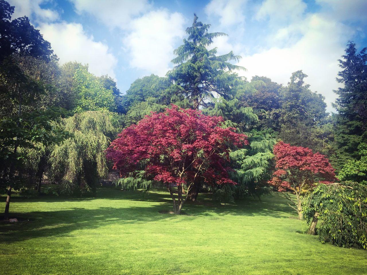 Tree Landscape Summer #summertime #sun #TagsForLikes.com #hot #sunny #warm #fun #beautiful #sky #clearskys #season #seasons #instagood #instasummer #photooftheday #nature #TFLers #clearsky #bluesky #vacationtime #weather #summerweather #sunshine #summertimeshine