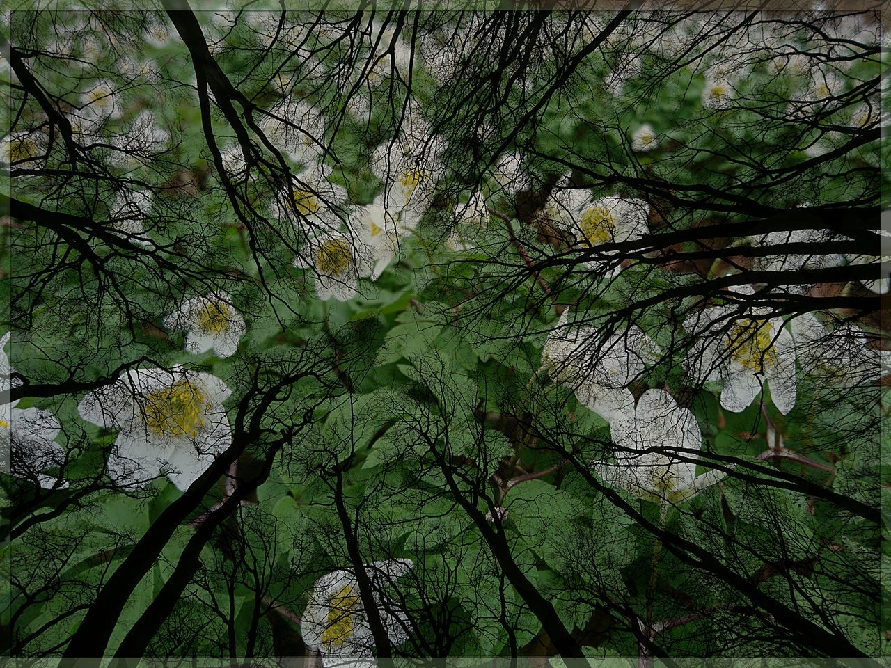 Blick nach oben und nach unten...Spring Time Forest Buschwindröschen Abstract Nature Abstract Photography Anemone Nemorosa Sonyphotography Sony Xperia Photography Streamzoofamily EyeEm Nature Lover EyeEm Deutschland Cut And Paste