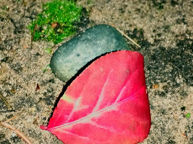 Close-up Red Leaf Little Rock Green Moss Dirt Road Outdoors Cool Night Air Loving Life! Enjoying Life Michigan Autumn 2016 Hello World ✌ Check This Out Having Fun :) Taking Photos Outdoors Photograpghy  Out And About Outdoor Beauty Nature_collection Nature Photography Natural Beauty Nature Lover