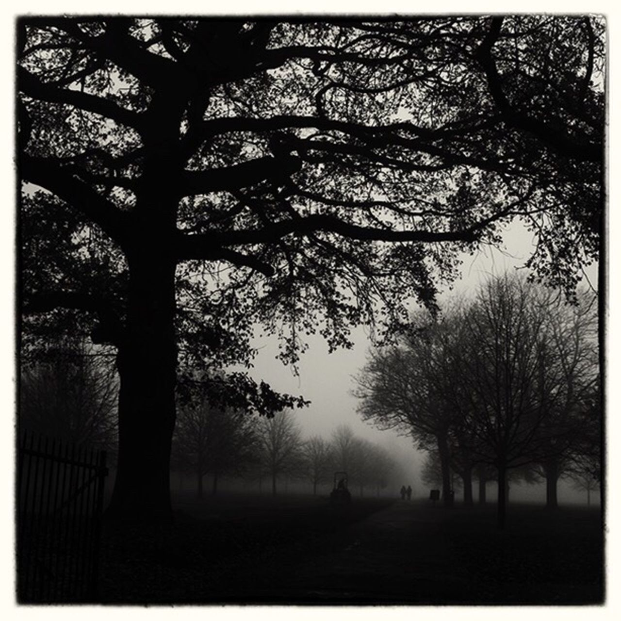 Regents Park Lostamongstthelost Capture The Moment Foggy Morning My Winter Favorites Melancholic Landscapes