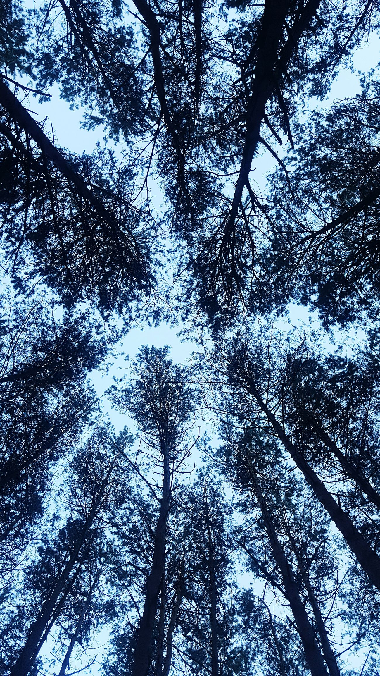 Trees Treescape Trees And Bushes Nature Photography Naturelovers Forest Forest Floor Forest Art Polandphotos Poland Nature Poland Eyeem Poland 💗