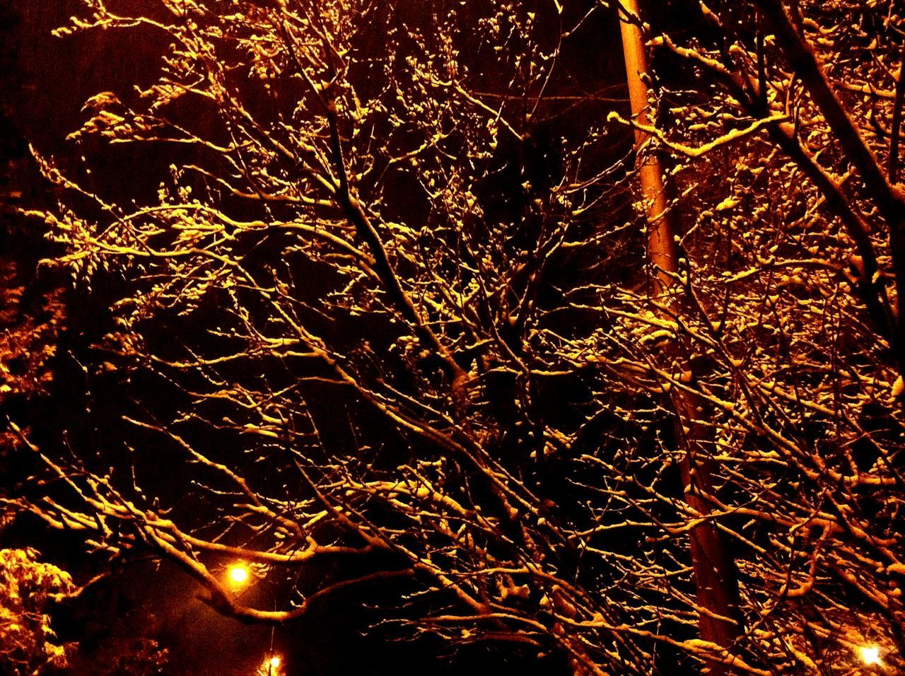 Heat - Temperature Orange Color No People Abstract Close-up Backgrounds Night Outdoors Molten Lava Nature Christmas Lights Christmas Vibes The Week On Eyem Eyeemcollection Best EyeEm Shot Week On Eyeem Check This Out Christmas Decoration Illuminated EyeEm Gallery Nightphotography