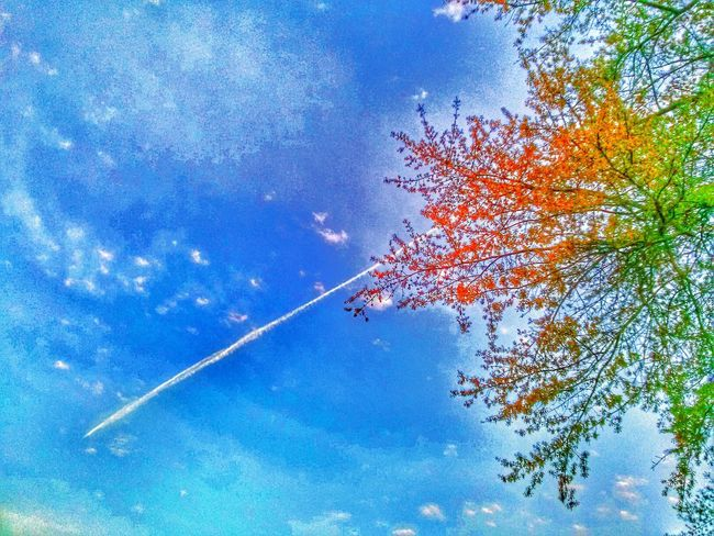 Shooting the rainbow. Andrography Cloud And Sky Tree Skyscape