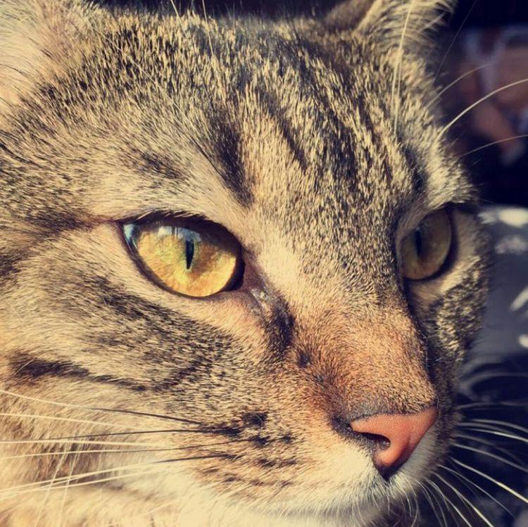 Cat The Purist (no Edit, No Filter) Beautiful Enjoying The Sun Hello Sunshine! Animals Im Beautiful Eyes Love ♥