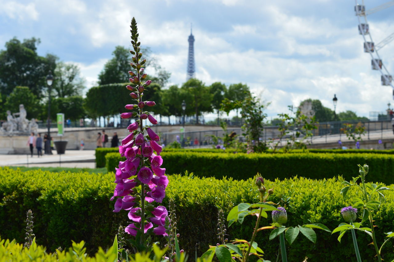 Adapted To The City Flower Travel Destinations Nature Outdoors Beauty In Nature Architecture Vacations French City Paris Paris, France  Cityscape Tourist Travel Photography City Scene Travel Eiffle Tower EyeEm Best Shots Foxglove City Garden