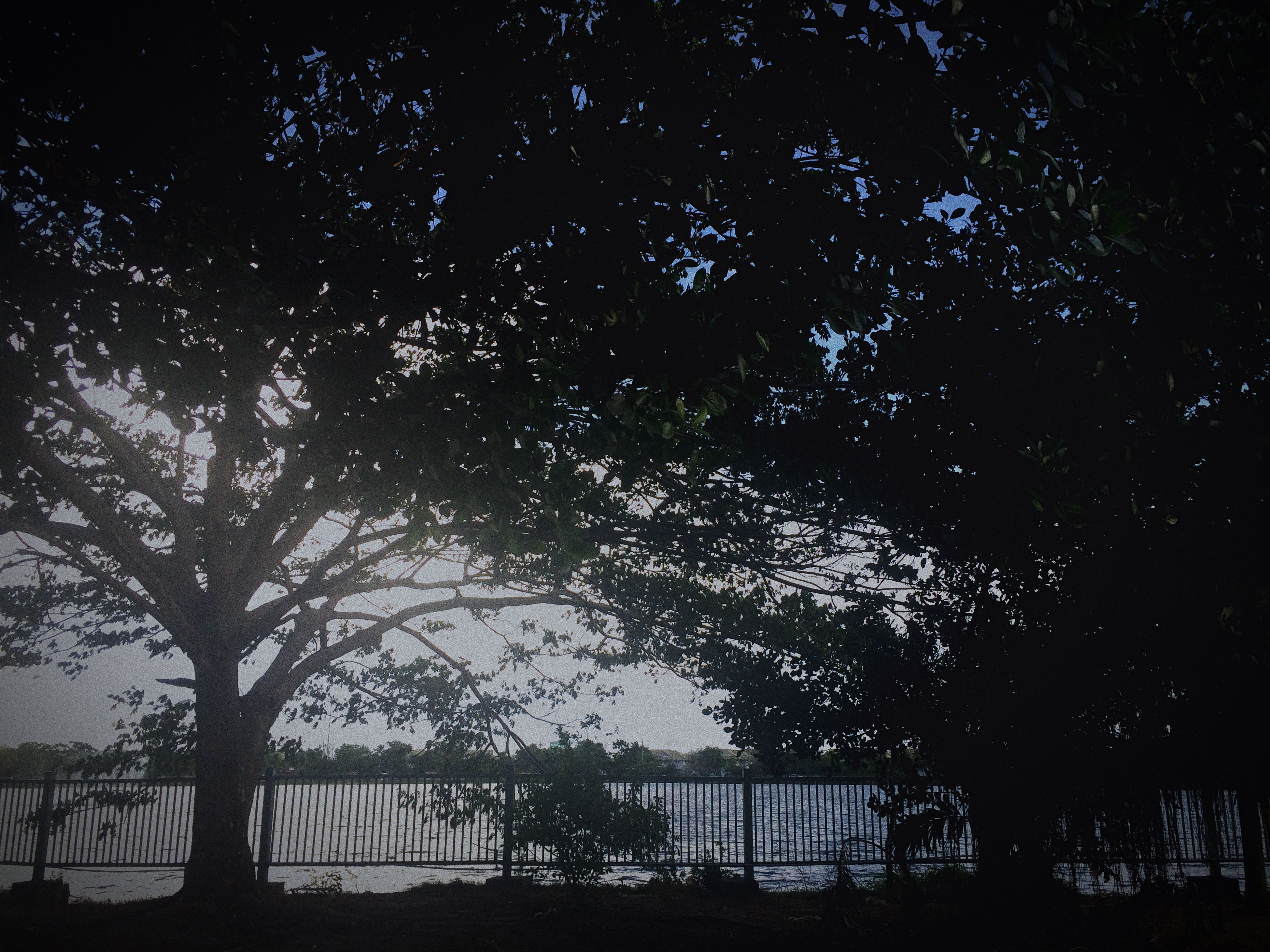 tree, silhouette, branch, growth, tranquility, nature, railing, fence, low angle view, beauty in nature, tranquil scene, sky, outdoors, no people, sunlight, scenics, day, shadow, park - man made space