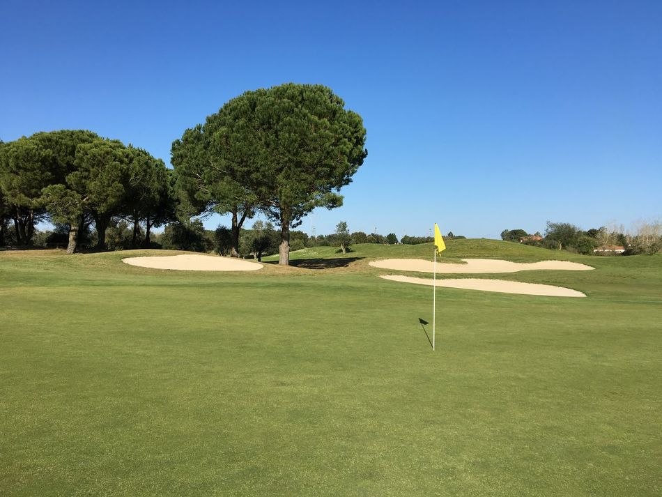 Beauty In Nature Blue Clear Sky Day Golf Golf Course Grass Green - Golf Course Green Color Nature No People Outdoors Sky Tree