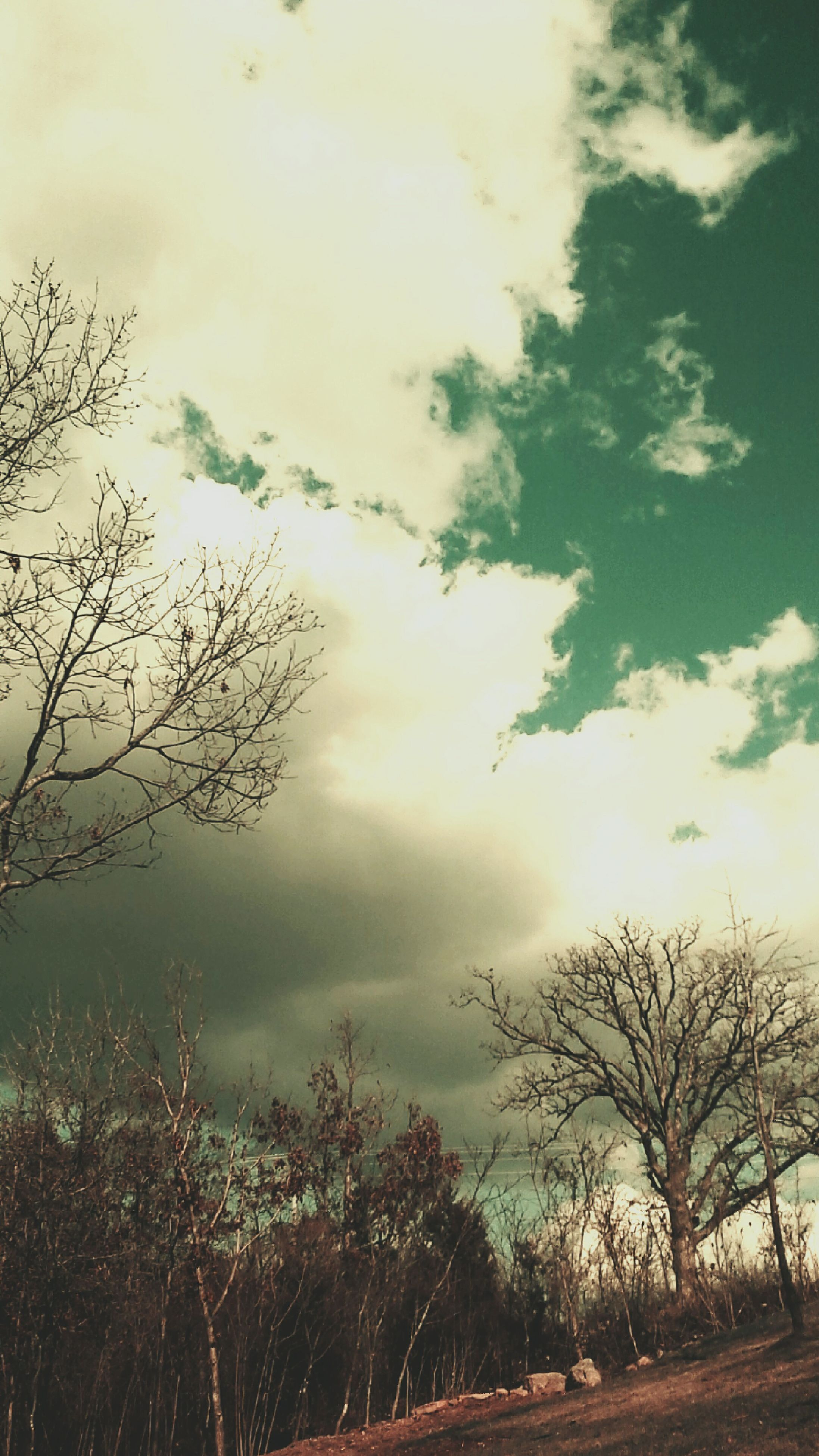 sky, tree, bare tree, cloud - sky, tranquility, tranquil scene, cloudy, scenics, nature, beauty in nature, branch, cloud, landscape, overcast, silhouette, idyllic, outdoors, growth, weather, non-urban scene