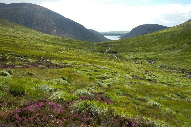 Mourne Mountains Bog Blanket Bog Reservoir