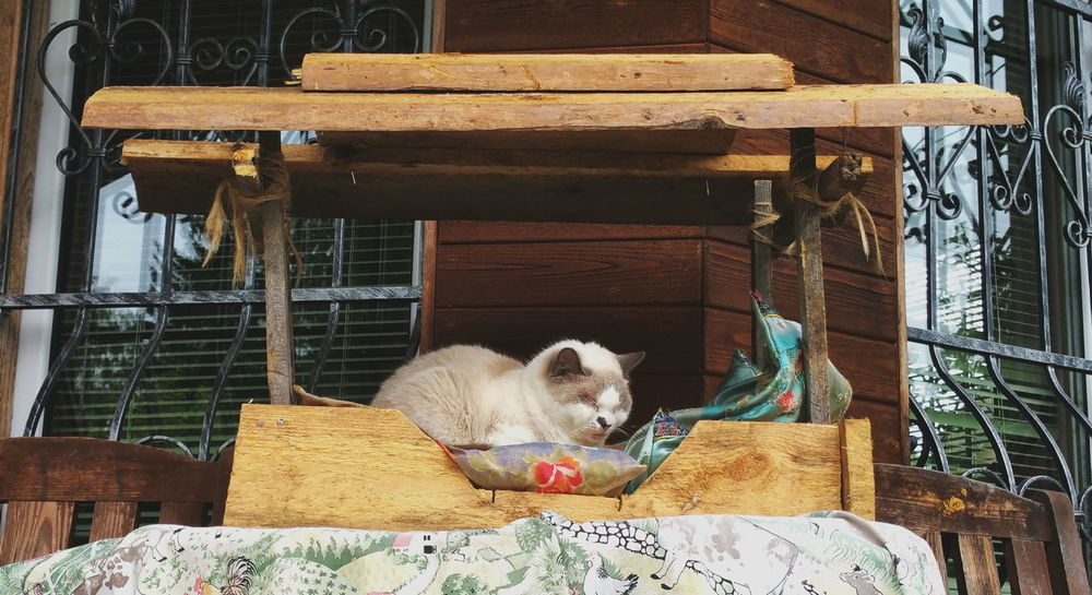 Our elder Cat in a Cat House my son built... Cats Pets Animals кошки кошка