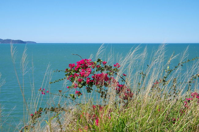 Australia Beauty In Nature Clear Sky Day Flower In Bloom Magnetic Island Outdoors Pink Color Plant Plant Scenics Sea Springtime Townsville, Queensland. Tranquil Scene Tranquility Vibrant Color Water Wildflower