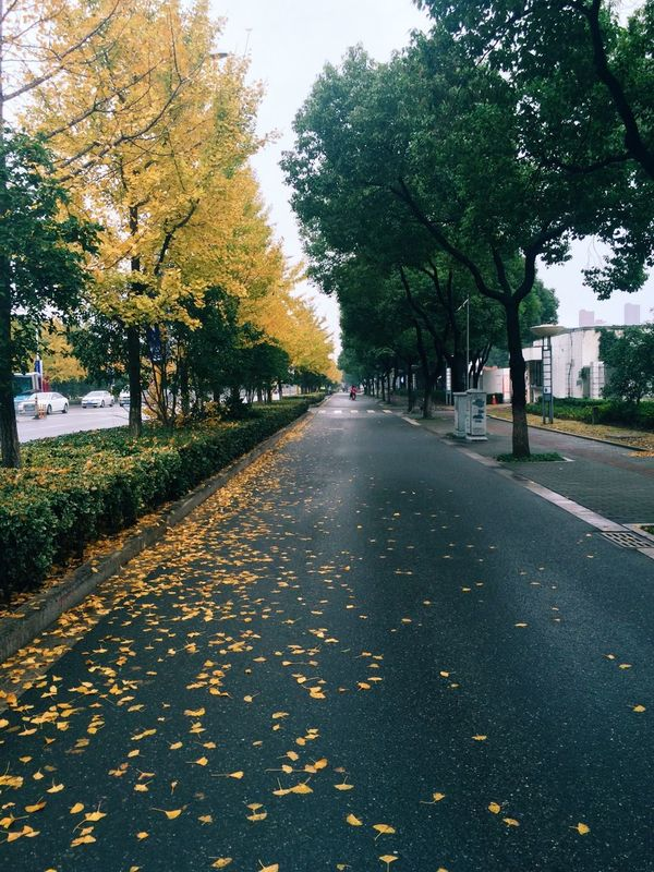 Autumn Autumn Colors Autumn Leaves Yellow Leaves Morning 秋天,你好。
