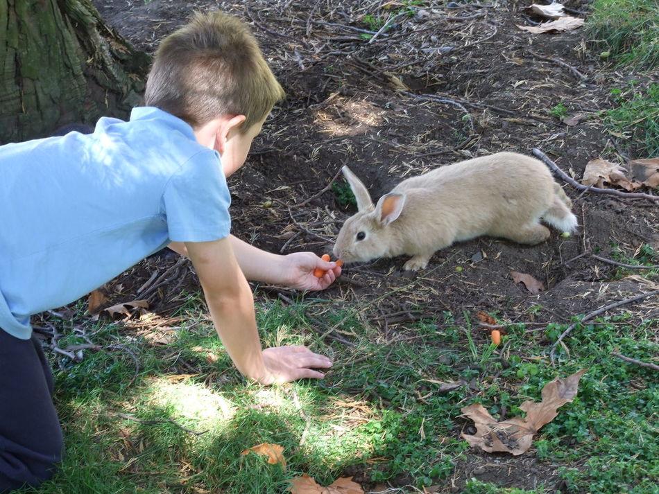 Beautiful stock photos of rabbit, Animal, Animal Themes, Boys, Casual Clothing