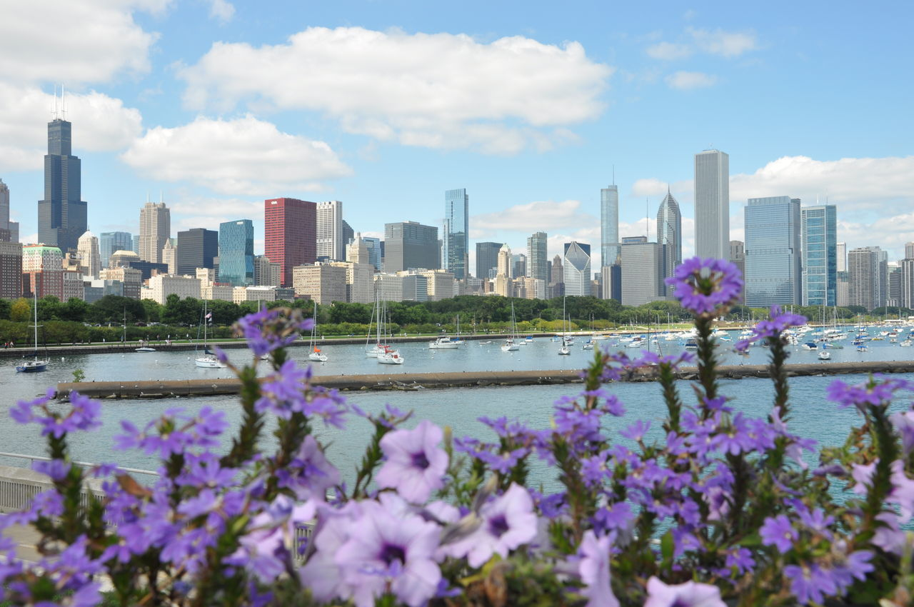 Purple Flowers In Front Of Lake Michigan By Modern Skyline