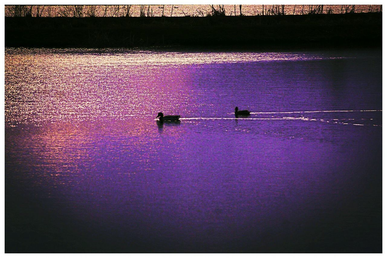 water, outdoors, purple, high angle view, nautical vessel, silhouette, day, river, transportation, nature, scenics, no people, rowing, oar, sculling