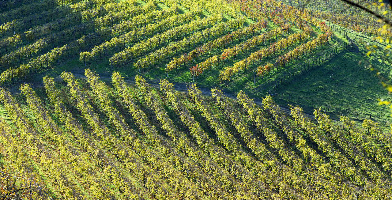 Beautiful stock photos of wine, Aerial View, Agriculture, Beauty In Nature, Crop