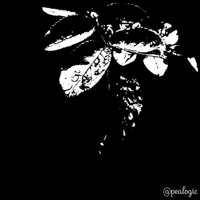 Nature Blackandwhite Simplicity Bwstyles Bws_worldwide Eye4photography  Greenthumb Bwstyles_gf Bwsquare Bwstyleoftheday Bws_artist_eu Most_deserving_bw EE_Daily: Black And White