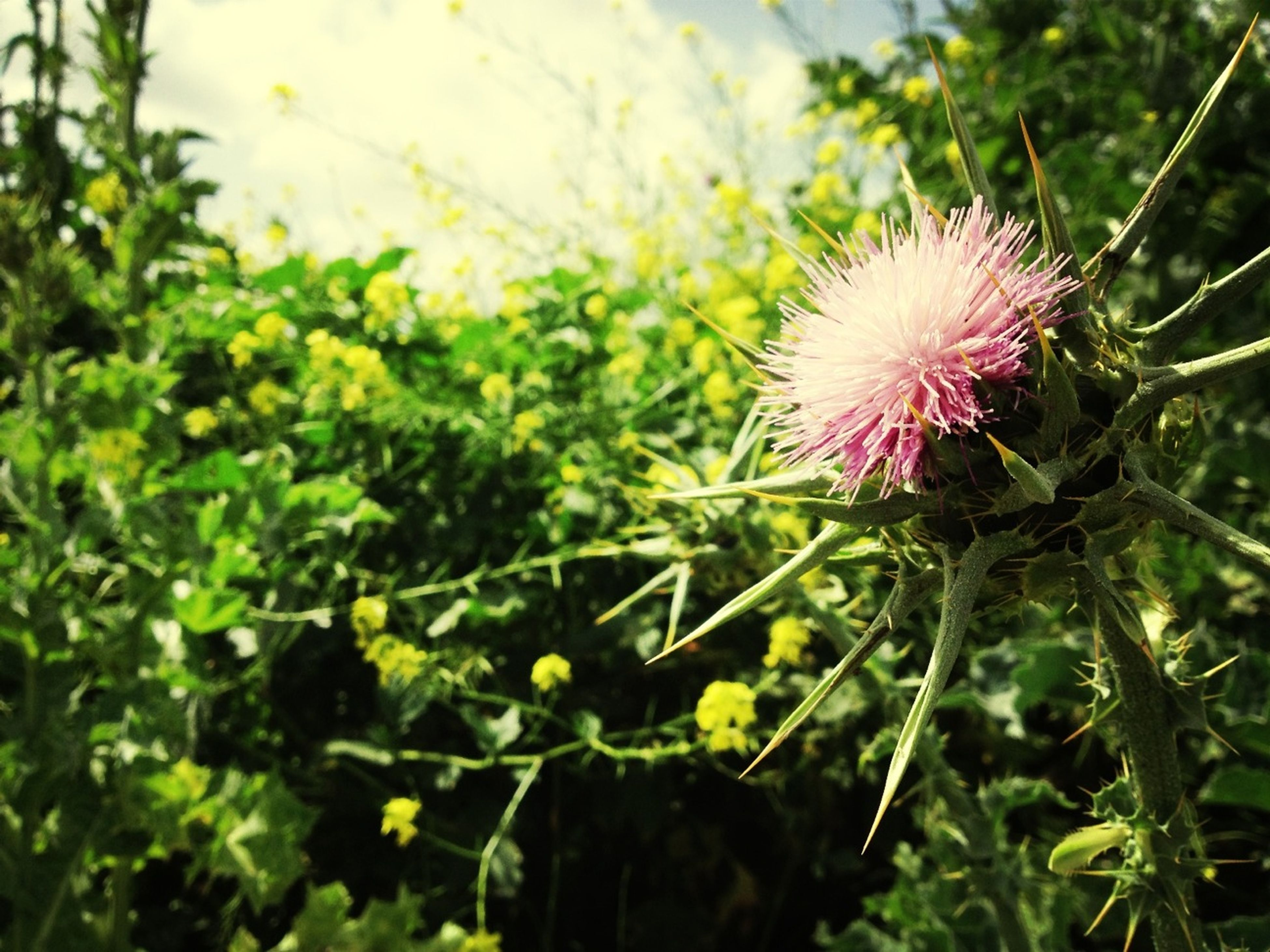 flower, growth, freshness, fragility, beauty in nature, plant, flower head, nature, pink color, blooming, close-up, focus on foreground, petal, in bloom, leaf, blossom, day, stem, green color, park - man made space