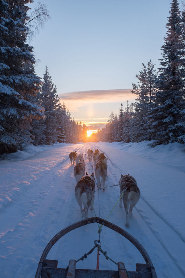 Snow ❄ Clouds And Sky Mush Dog Snow Cold Temperature Dogs Winter Wonderland Winterwonderland Dog Sledding Wintertime Sunset Husky Adventure Dog Sled Dog Mush Camp Animal Themes Winter Sled Dog Musher Cold Winter ❄⛄ Eyem Best Shots Nature_collection Sleddog Sledge Dog Eyemnaturelover