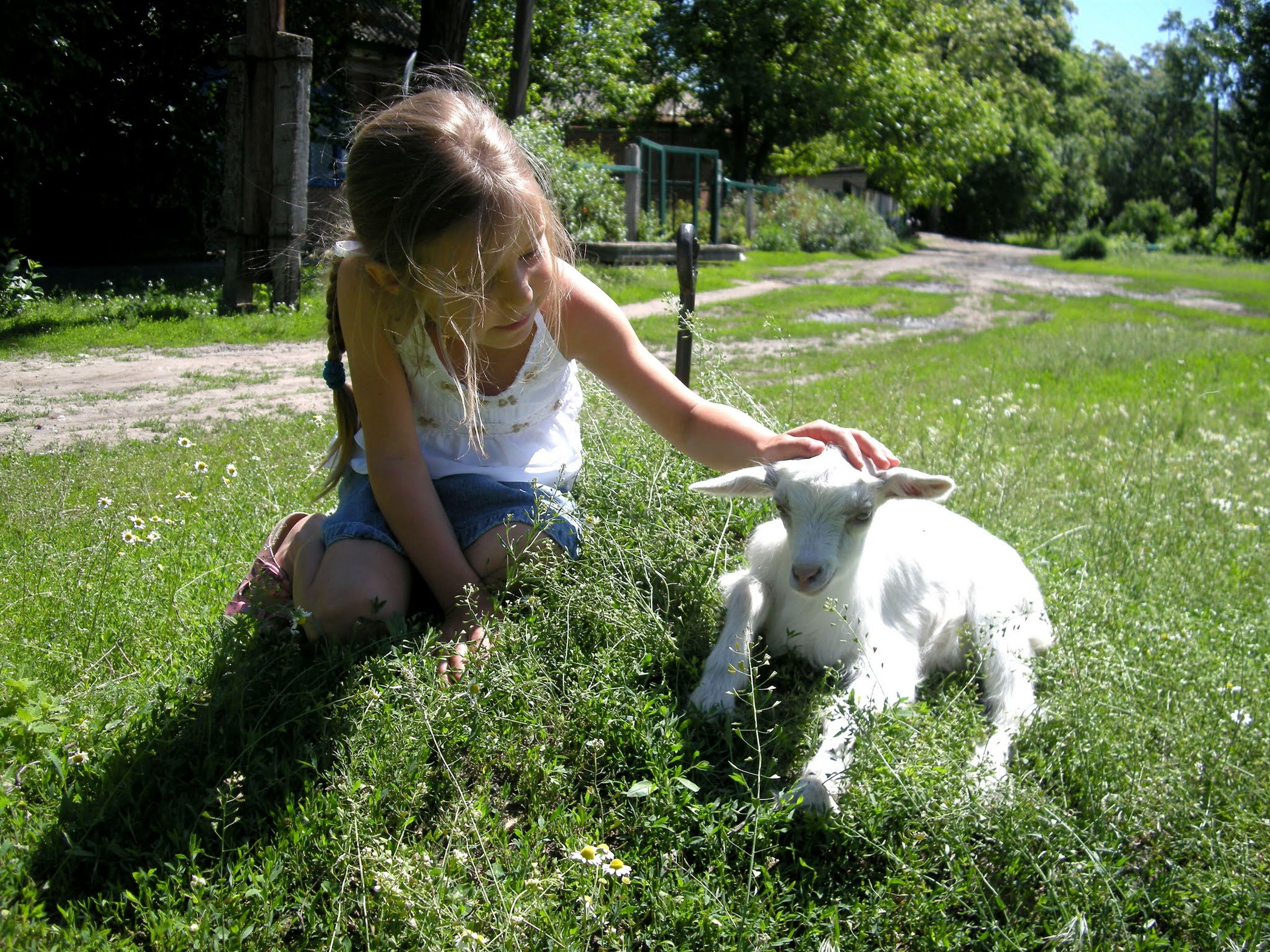 Animal Themes Child Childhood Day Nature Outdoors Козлёнок ребёнок с животным