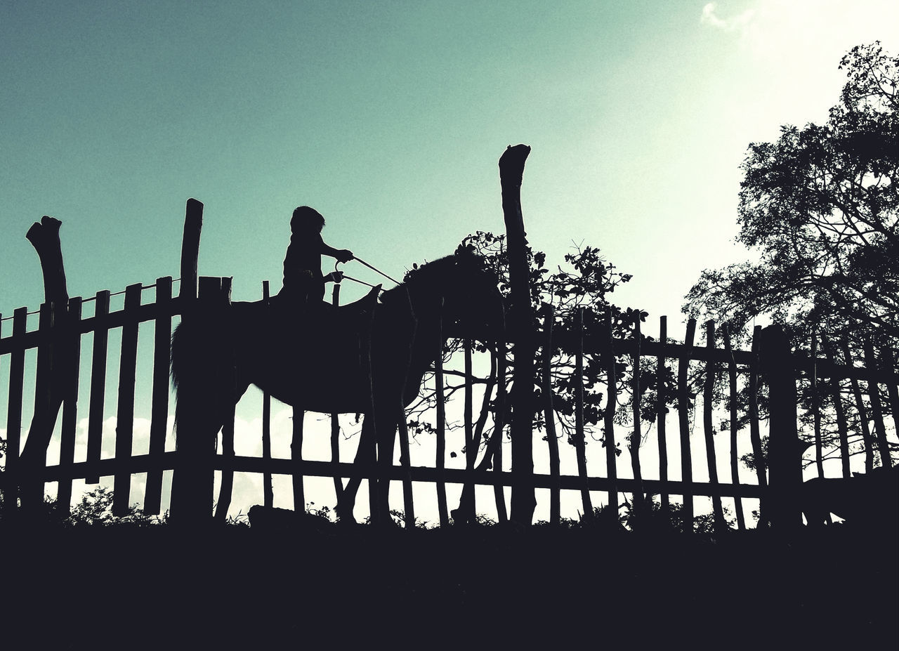 one person, railing, real people, silhouette, clear sky, tree, full length, sky, outdoors, leisure activity, day, lifestyles, standing, animal themes, nature, mammal, people