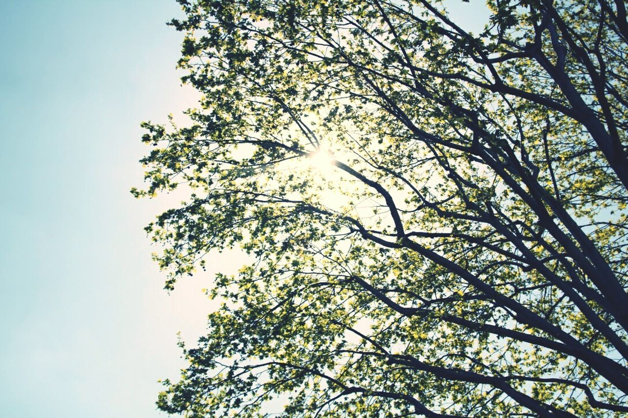 tree, nature, low angle view, growth, no people, branch, clear sky, tranquility, beauty in nature, day, hope, outdoors, height, sky, high, freshness