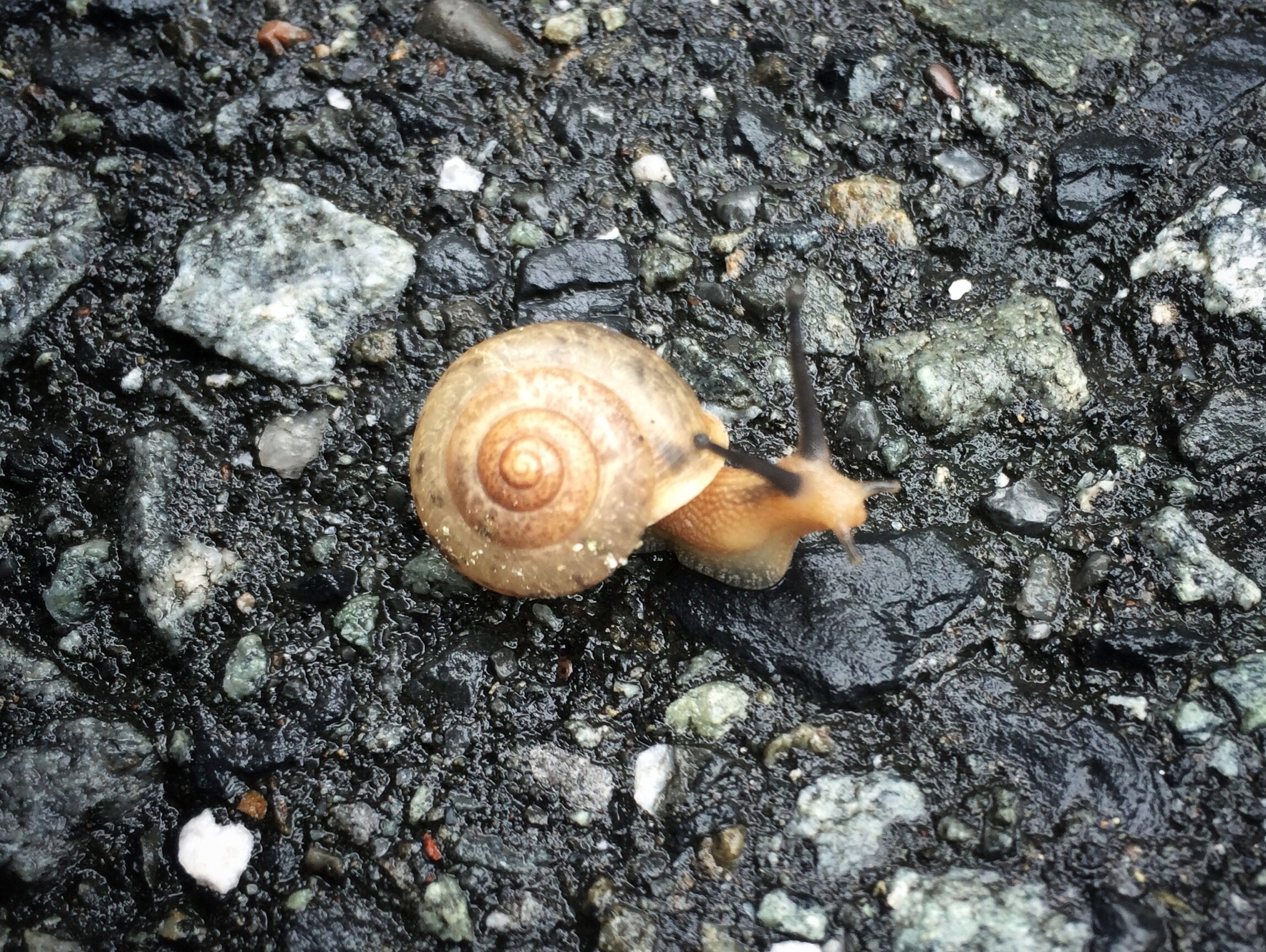 high angle view, animal shell, seashell, nature, snail, fragility, close-up, shell, fungus, ground, outdoors, directly above, day, mushroom, natural pattern, animal themes, stone - object, wildlife, rock - object, beauty in nature