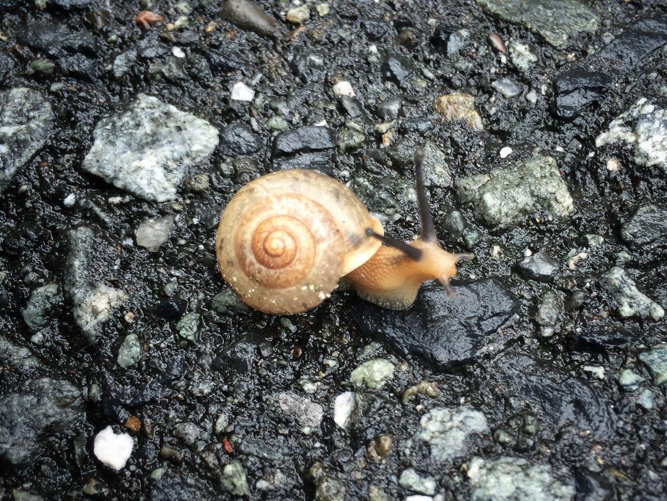 台風一過とその子ども 蝸牛 カタツムリ Snail Hello World