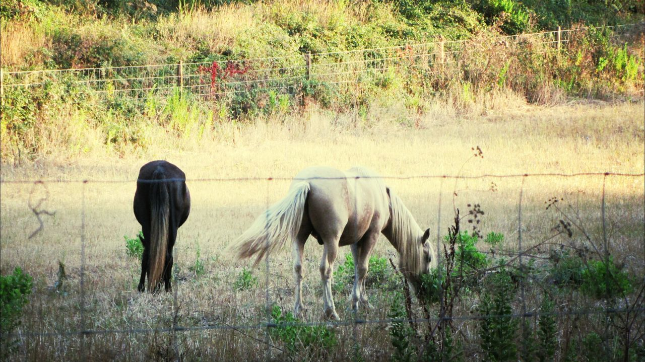 Two Lovely Horses ... EyeEm Animal Lover Eyem Animal Lovers Eyeem Animal Horses