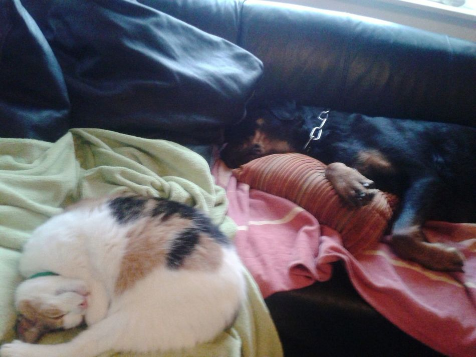 @home ♡ Lilli Mit Freya Katze Und Hund Cat And Dog Sleeping Animal Themes Pets Domestic Animals Dog And Cat Napping Lazy Sunday Enjoy The New Normal