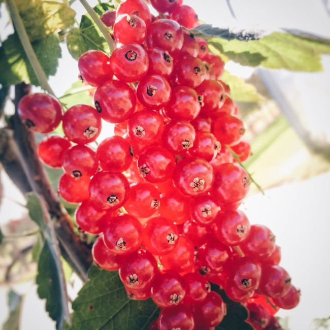 Berrys Red Berry Fruit Fruit