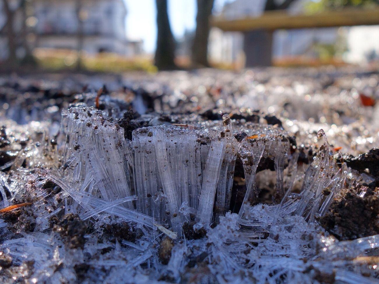 Needle ice 今日も寒いね。