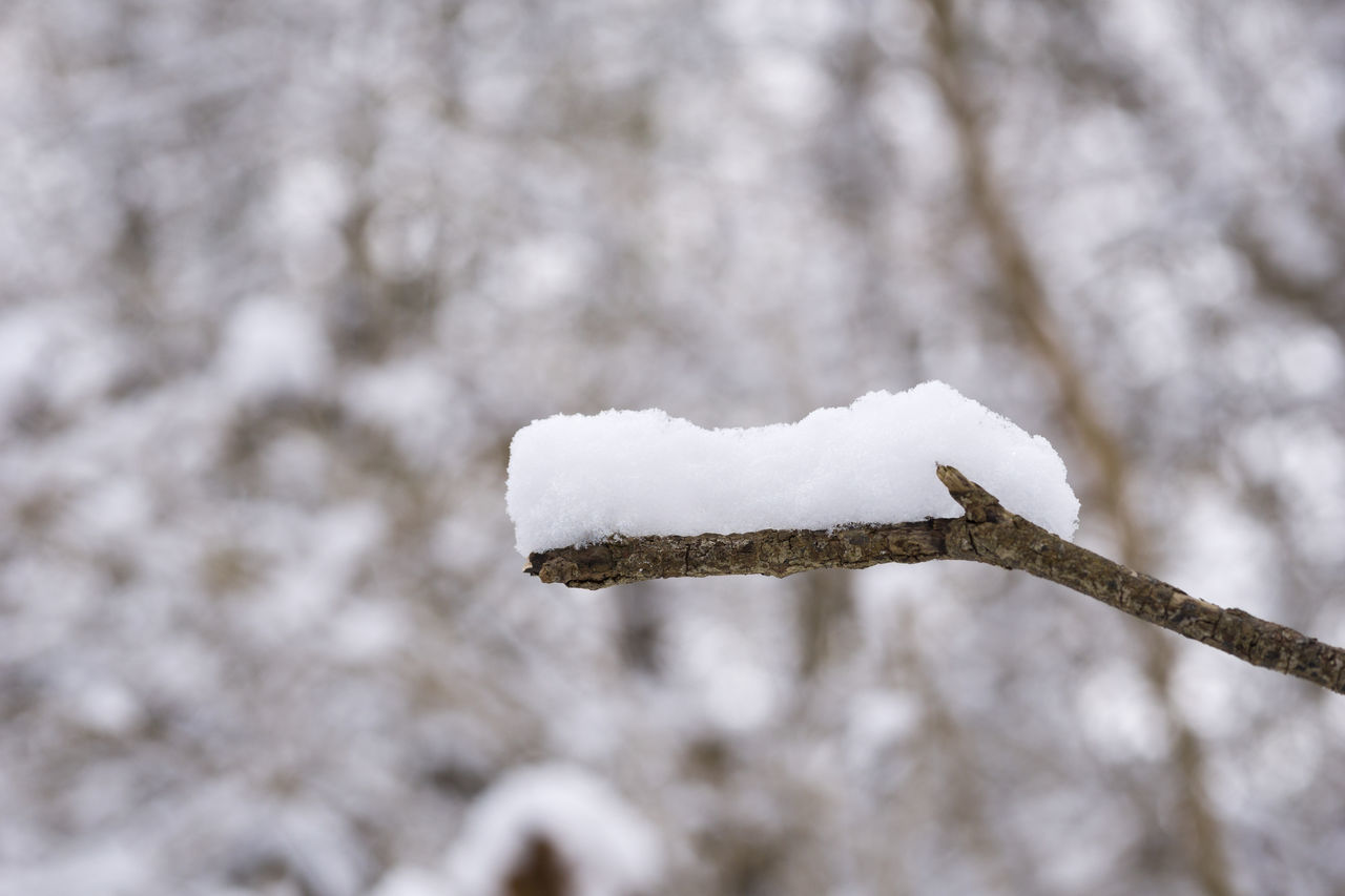 Snow on a little Branch Branches Closeup Cold Cold Temperature Forest Frozen Ice Iced Nature Outdoor Snow Winter