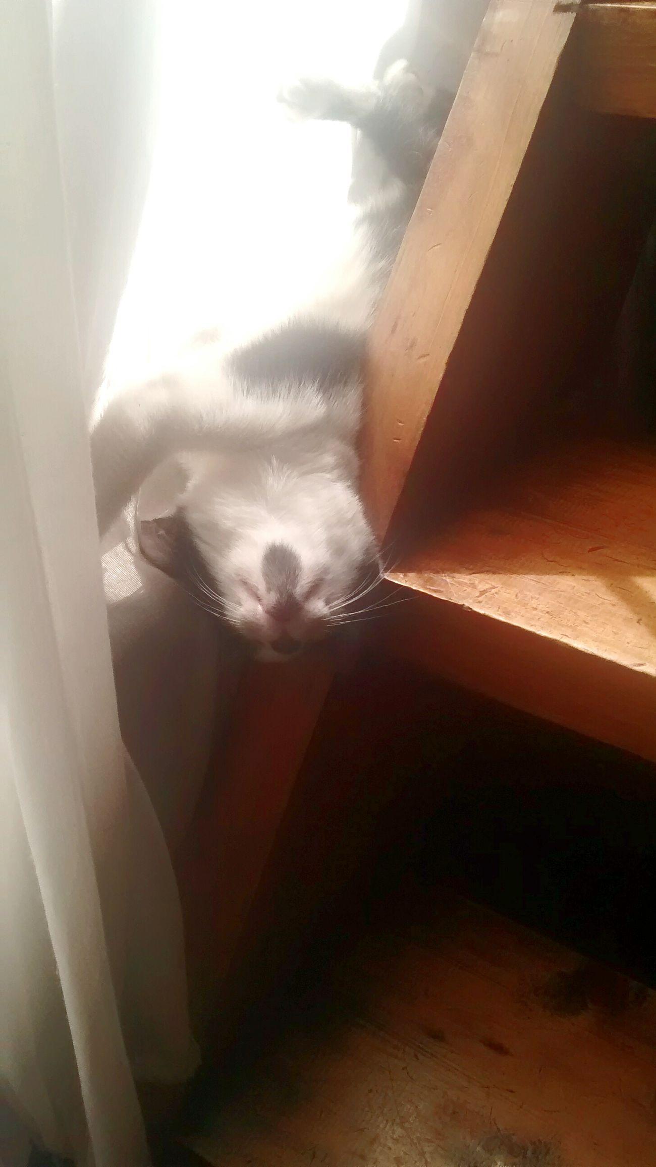Gatita 😸 Cat♡ Gatita  Foto Check This Out Hello World Dia Extraña Hi! Ilike Gatuna FotoDelDia First Eyeem Photo Fotografia Chile♥ Myfriend