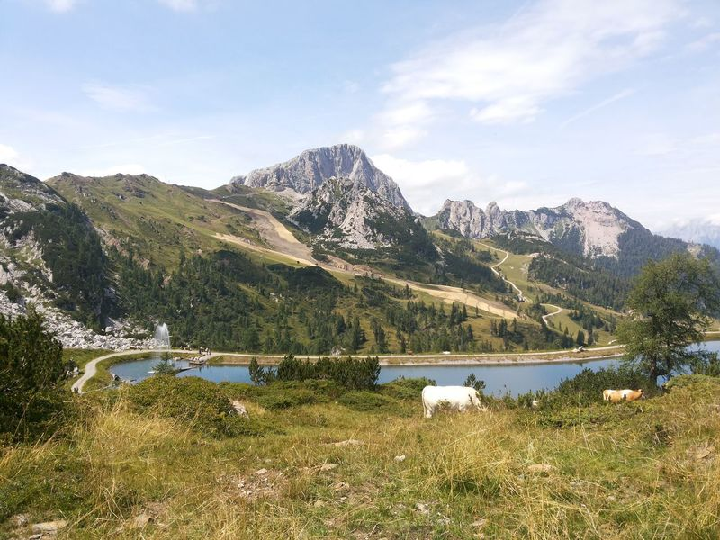 Landscape of Austrian Alps with cows Cows Austrian Alps Beauty In Nature Grass Lake Landscape Of Austrian Alps With Cows Milk Mountain Natural Milk Nature Organic Food Sky Water