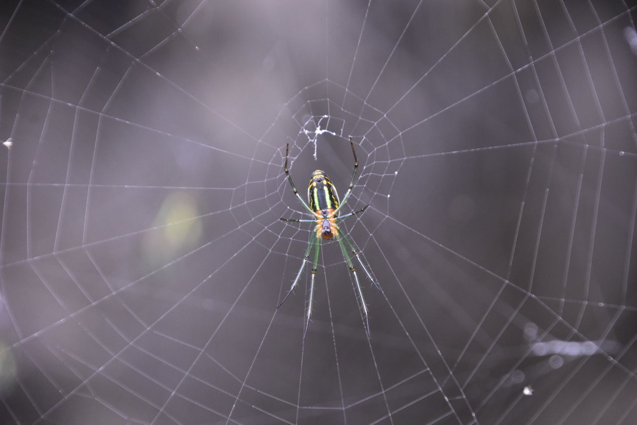 Spider Web Spider Spider Web Spiderweb Spiders Spiderman Spiderworld Spider Nature_collection Eyenaturelover Spiderwebs Spider Webs Nature_collection Nature Insects  Animals In The Wild