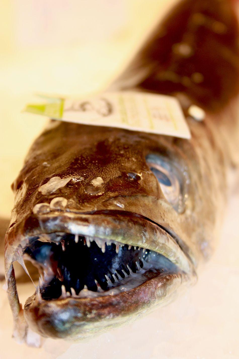 #barcelona #fish #market Animal Themes Close-up Freshtotable