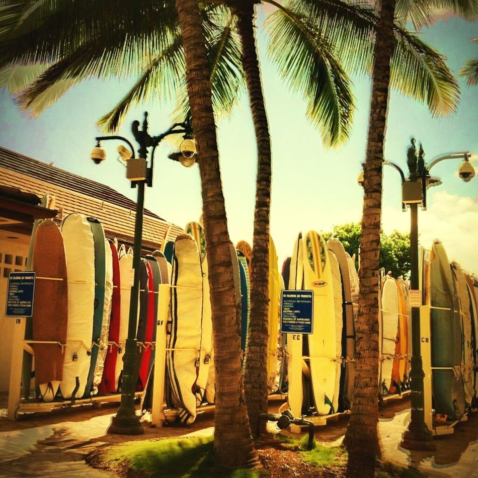 Palmtrees Trees Beach Tropical Paradise