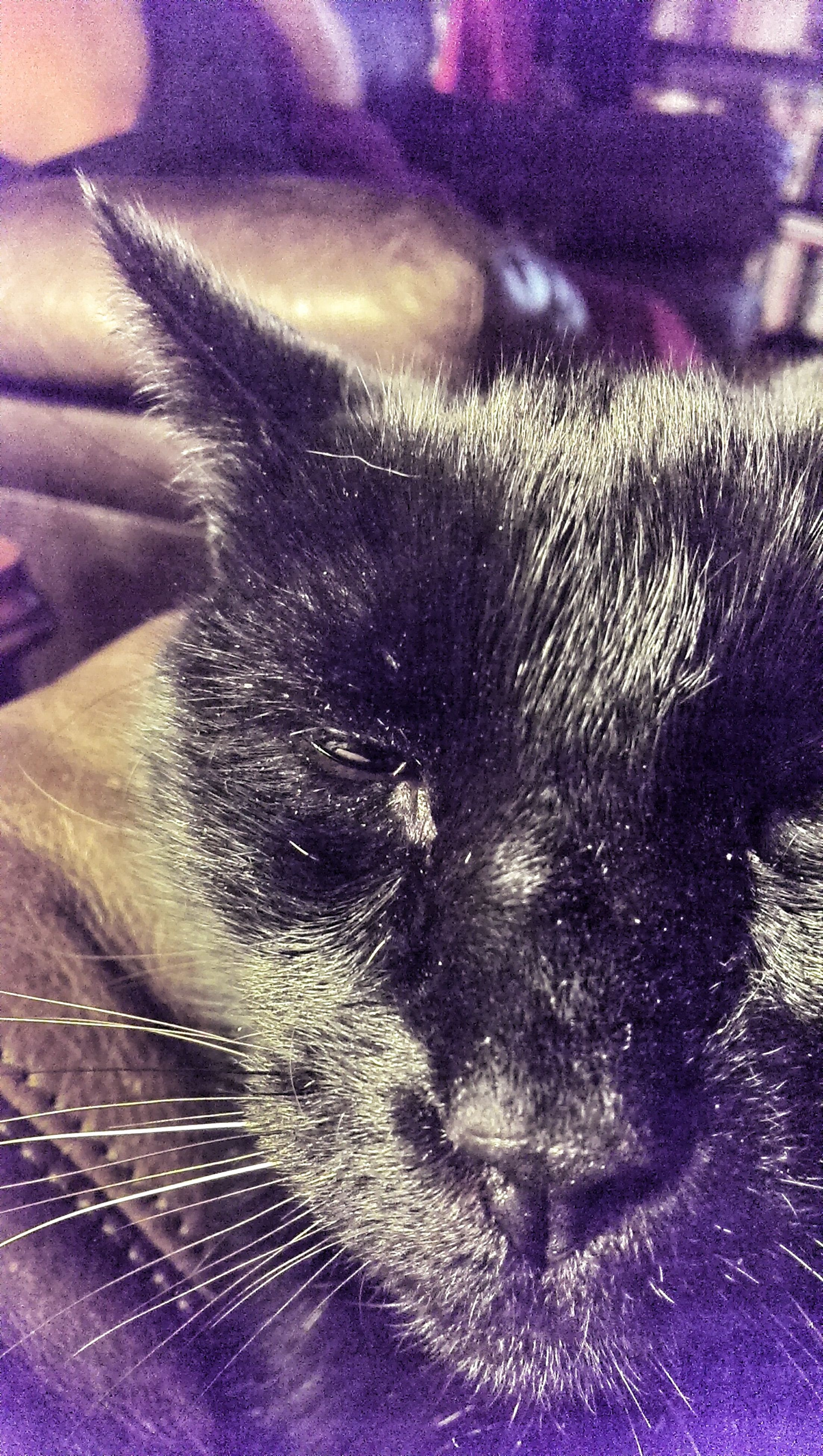 one animal, animal themes, pets, domestic cat, cat, domestic animals, close-up, indoors, whisker, mammal, feline, extreme close-up, selective focus, high angle view, full frame, detail, no people, backgrounds, part of, sleeping