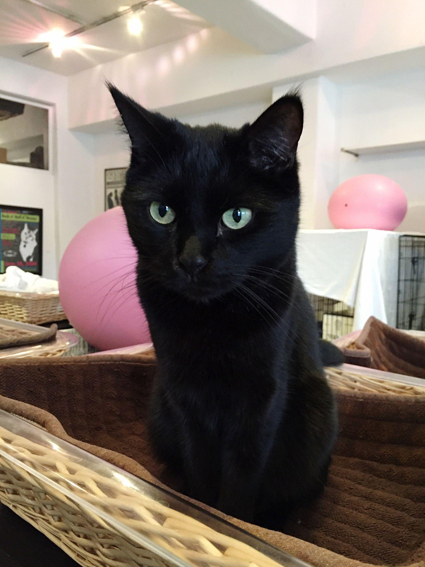 Sashimi FreeRoaming Cats Sante D'Or Rescuecat Cute AdoptDontShop
