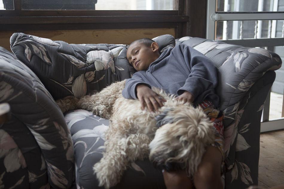 Beautiful stock photos of sleep, , Animal Themes, Casual Clothing, Dog