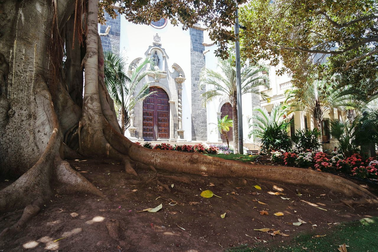 Tenerife Religion Place Of Worship Architecture Spirituality Built Structure No People Day Outdoors City EyeEm Best Shots Eye4photography  Fresh 3 Beauty In Nature Nature The Great Outdoors - 2017 EyeEm Awards Art Is Everywhere Light And Shadow Tree_collection  Nature_collection
