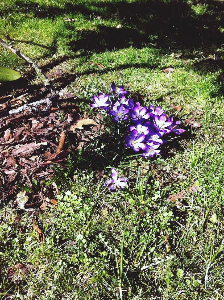 Springtime!!?