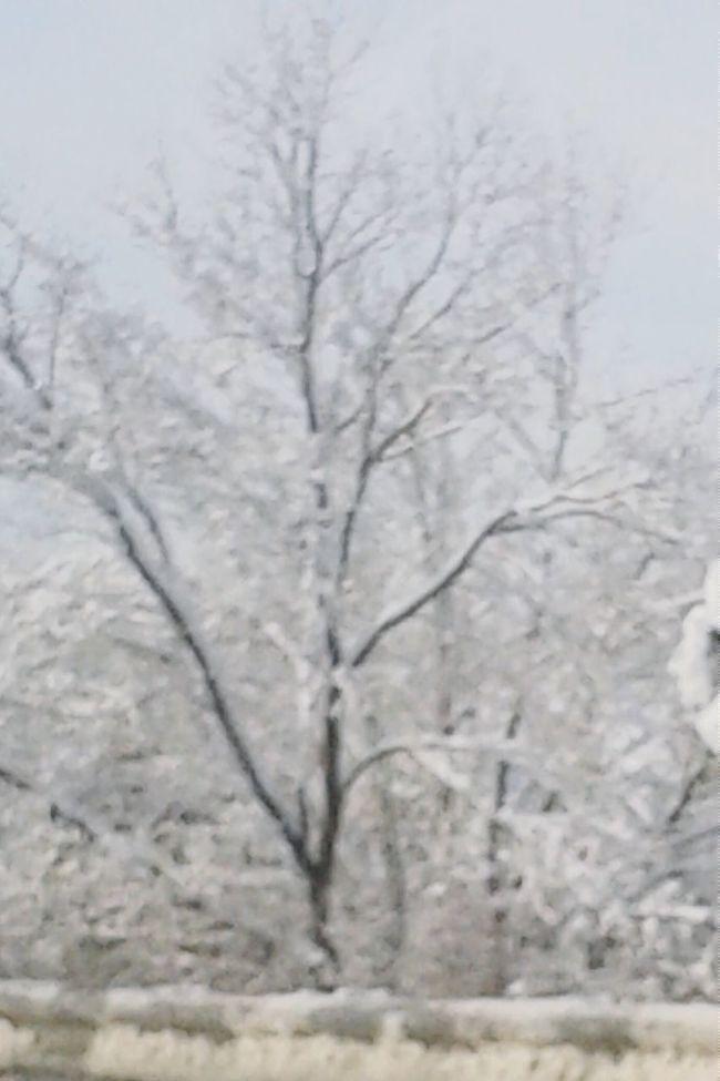 New England winter.... How Do We Build The World? First Eyeem Photo hello world ! Wintertime Winter In Massachsetts