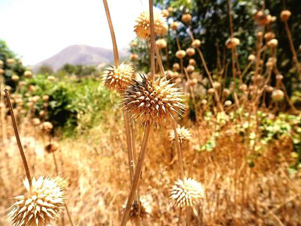 Naturaleza Beautiful Felicidad Paz ✌ Aire