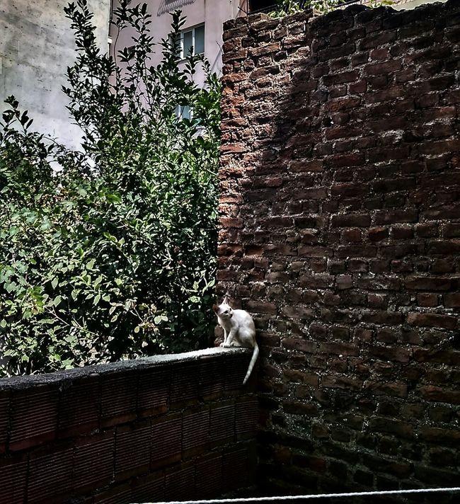 Wall Cat Cute Effect Aydin/Turkey Live Natural Happiness Like Peace Miss