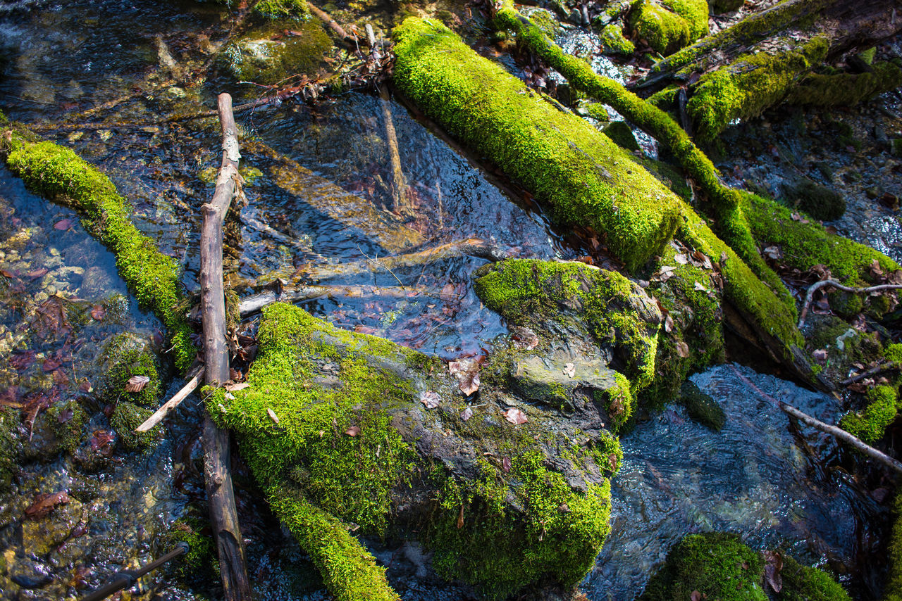 moss, nature, no people, green color, rock - object, beauty in nature, tranquility, outdoors, tranquil scene, day, water, growth, scenics, close-up