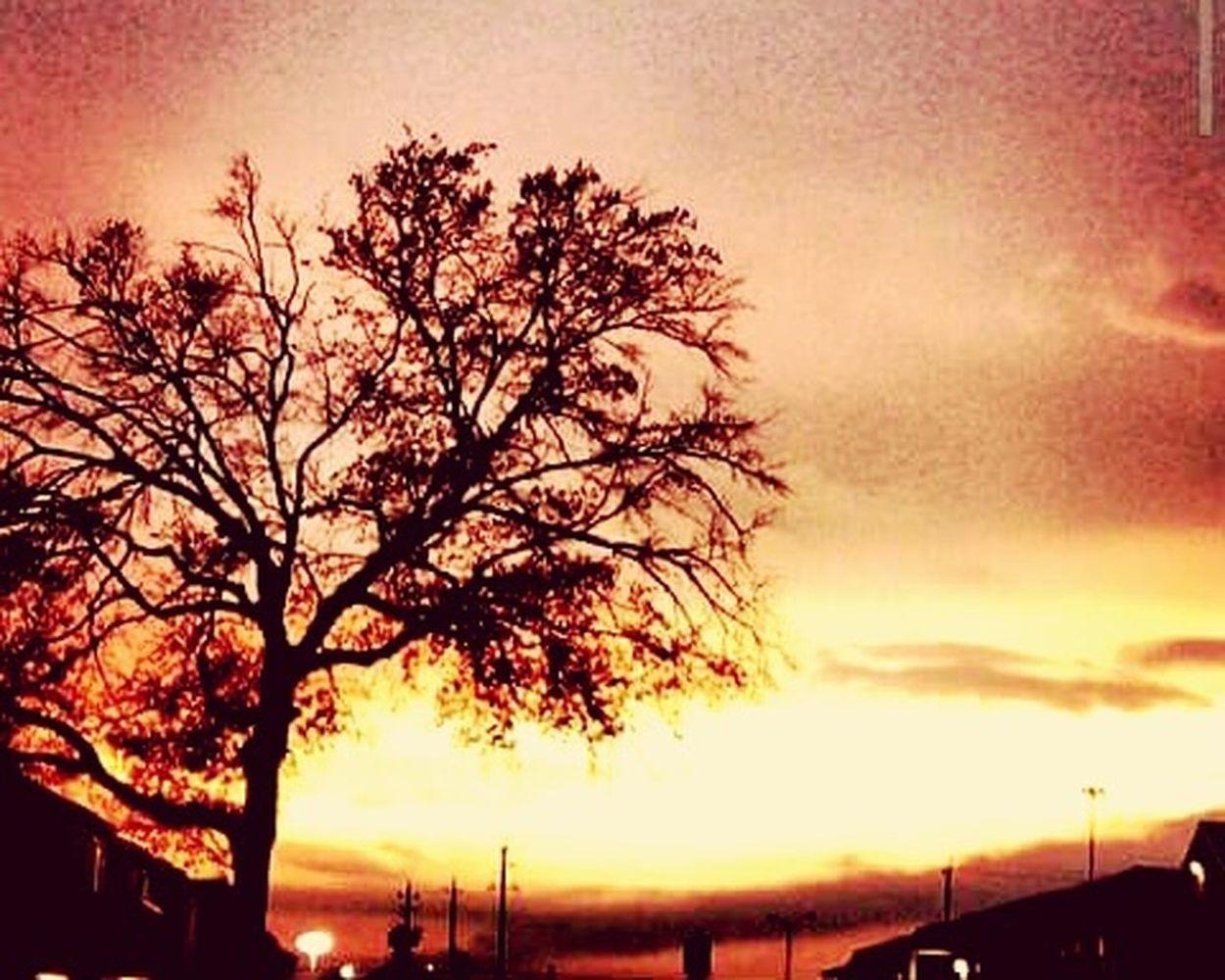 Houston Texas Goodson Sunset Sky Fall Colors